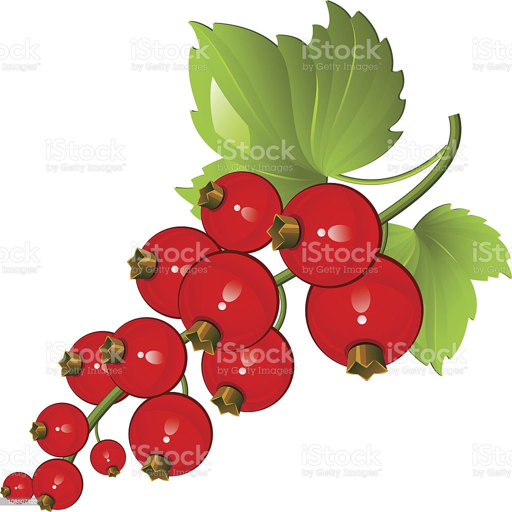 Redcurrant royalty-free stock vector art