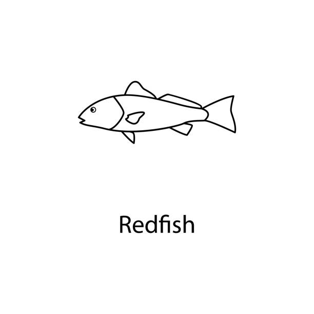 redfish icon. element of marine life for mobile concept and web apps. thin line redfish icon can be used for web and mobile. premium icon - redfish stock illustrations, clip art, cartoons, & icons