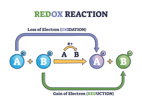 Redox reaction as atoms chemical oxidation states change outline diagram. Labeled educational explanation scheme with electron gain and loss in oxidation or reduction process vector illustration.