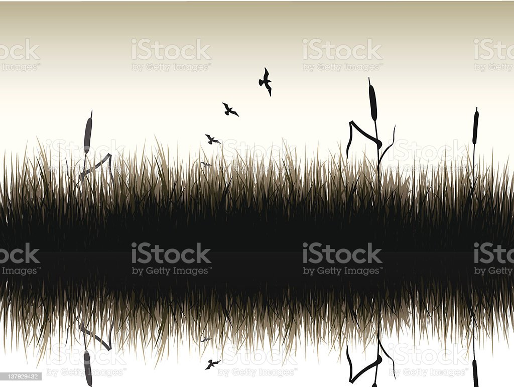 Reed and birds vector art illustration