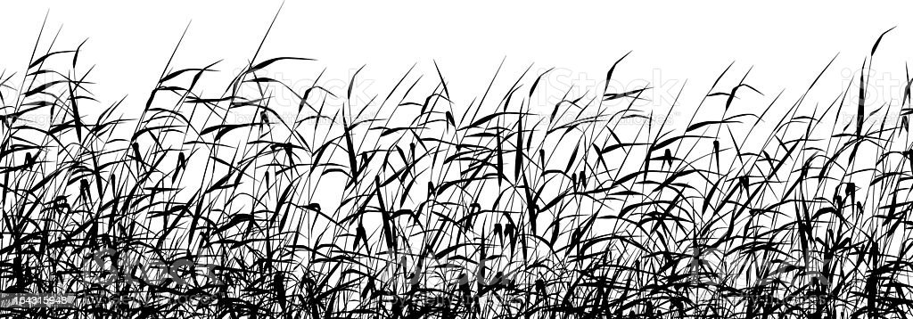 Reed foreground vector art illustration