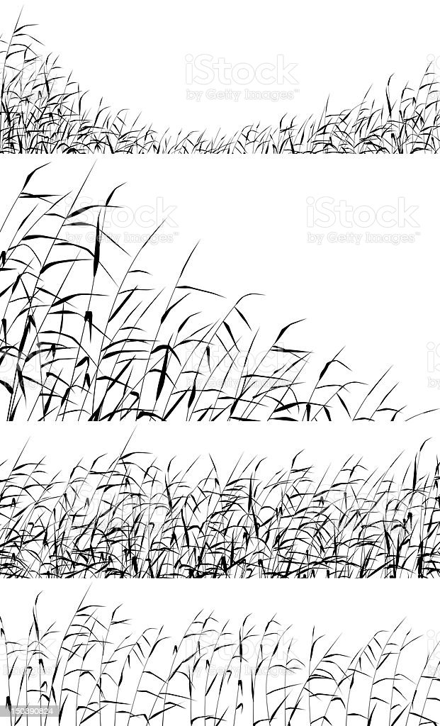 Reed foregrounds vector art illustration