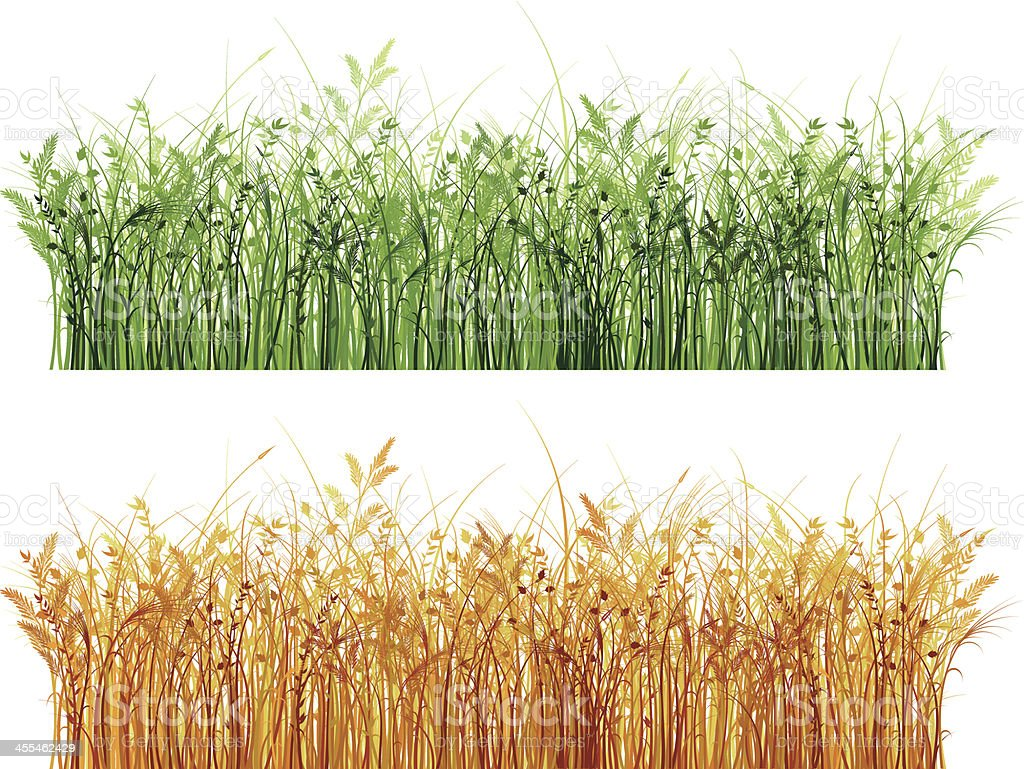 reed marshes. vector art illustration