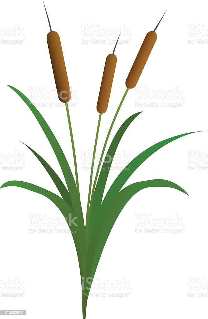 royalty free cattail clip art vector images illustrations istock rh istockphoto com cattails clip art realistic cattail clipart free