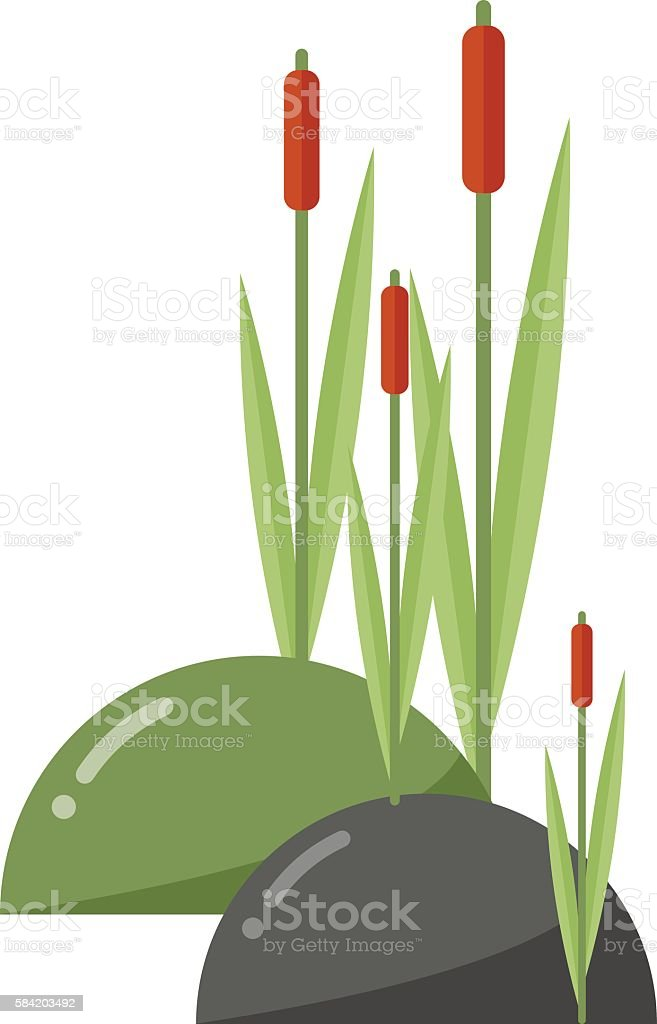royalty free cattail clip art vector images illustrations istock rh istockphoto com Cattail Silhouette cattail flower clipart