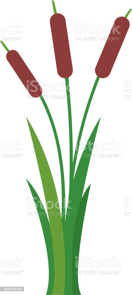 royalty free cattail clip art vector images illustrations istock rh istockphoto com  cattail clipart black and white