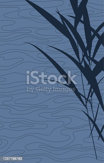 istock Reeds by the water(Background) 1257796783