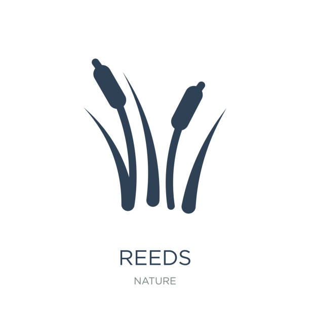 reeds icon vector on white background, reeds trendy filled icons reeds icon vector on white background, reeds trendy filled icons from Nature collection lakes stock illustrations