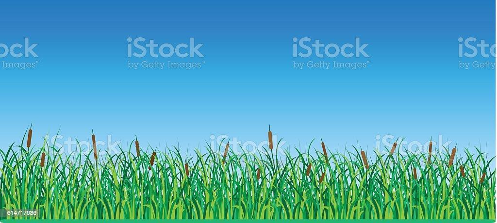 Reeds vector art illustration