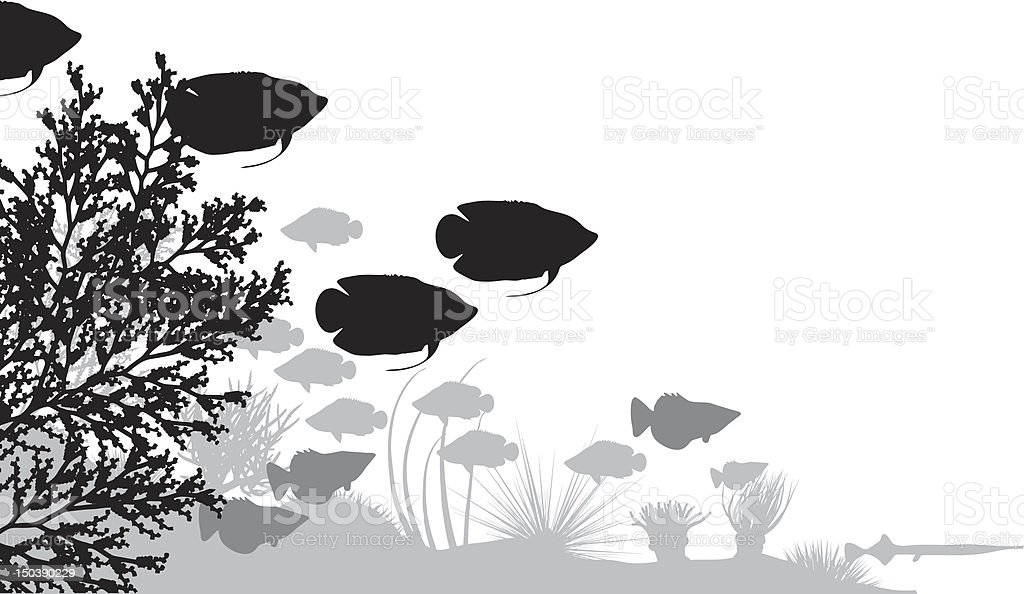 Reef royalty-free reef stock vector art & more images of animal