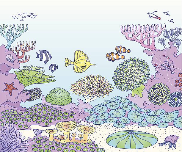 reef - - bildkomposition und technik stock-grafiken, -clipart, -cartoons und -symbole