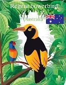 Regent Boverbird