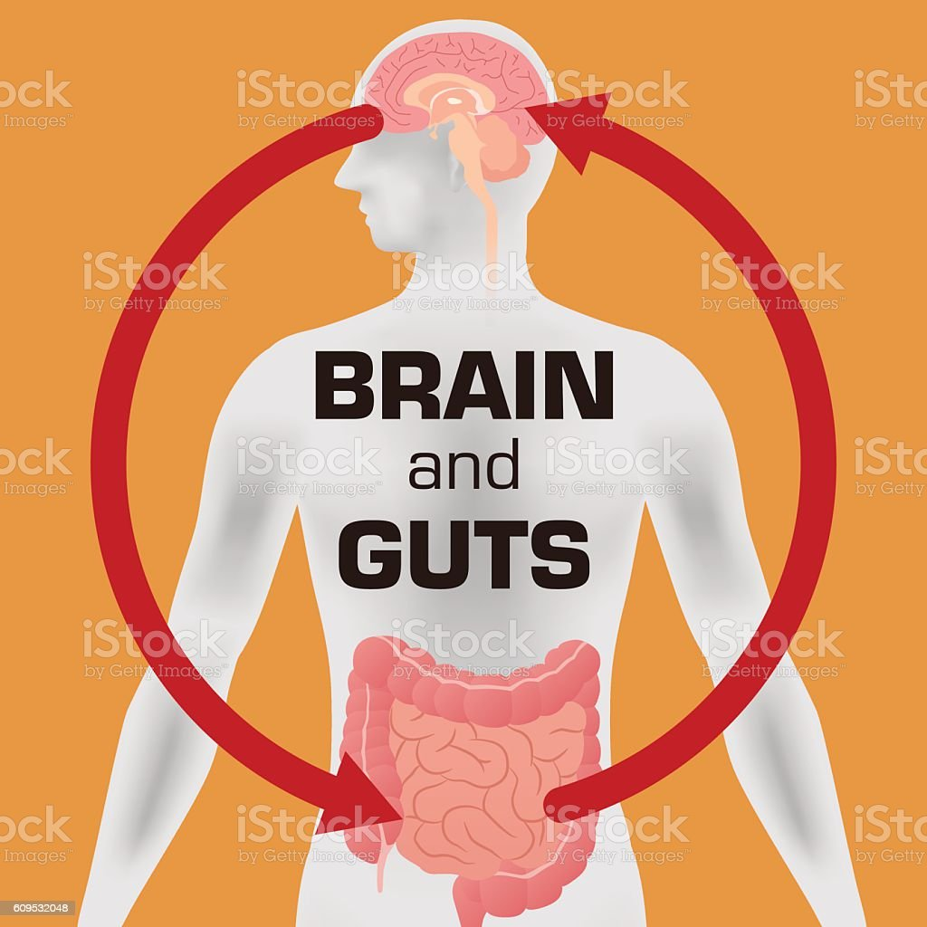 Relation of human brain and guts, second brain vector art illustration