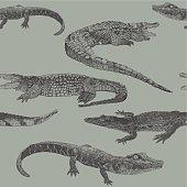 istock Reptile Rpt 521367053