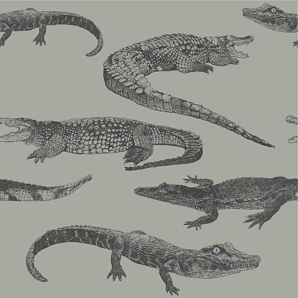 reptile rpt - crocodile stock illustrations