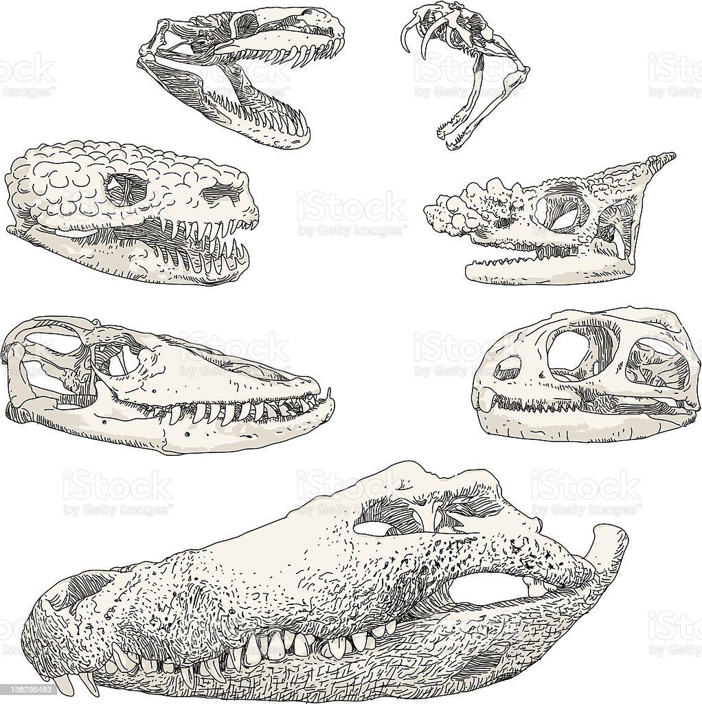 Reptile Skulls vector art illustration