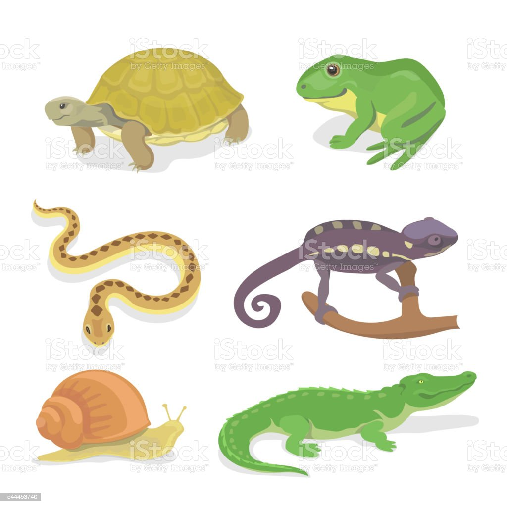 Reptiles and amphibians decorative set of crocodile turtle snake chameleon vector art illustration