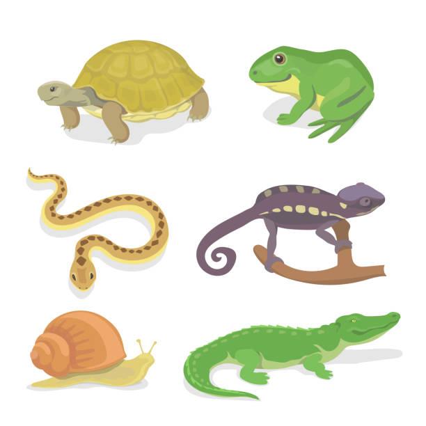 stockillustraties, clipart, cartoons en iconen met reptiles and amphibians decorative set of crocodile turtle snake chameleon - slak