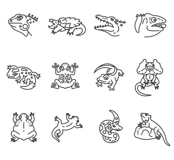 illustrazioni stock, clip art, cartoni animati e icone di tendenza di reptiles and amphibians icons set. editable stroke - tetrade