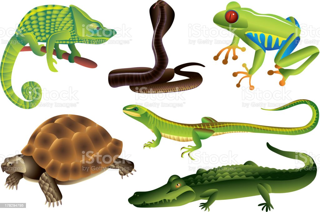 reptiles and amphibians set - Royalty-free Alligator stock vector