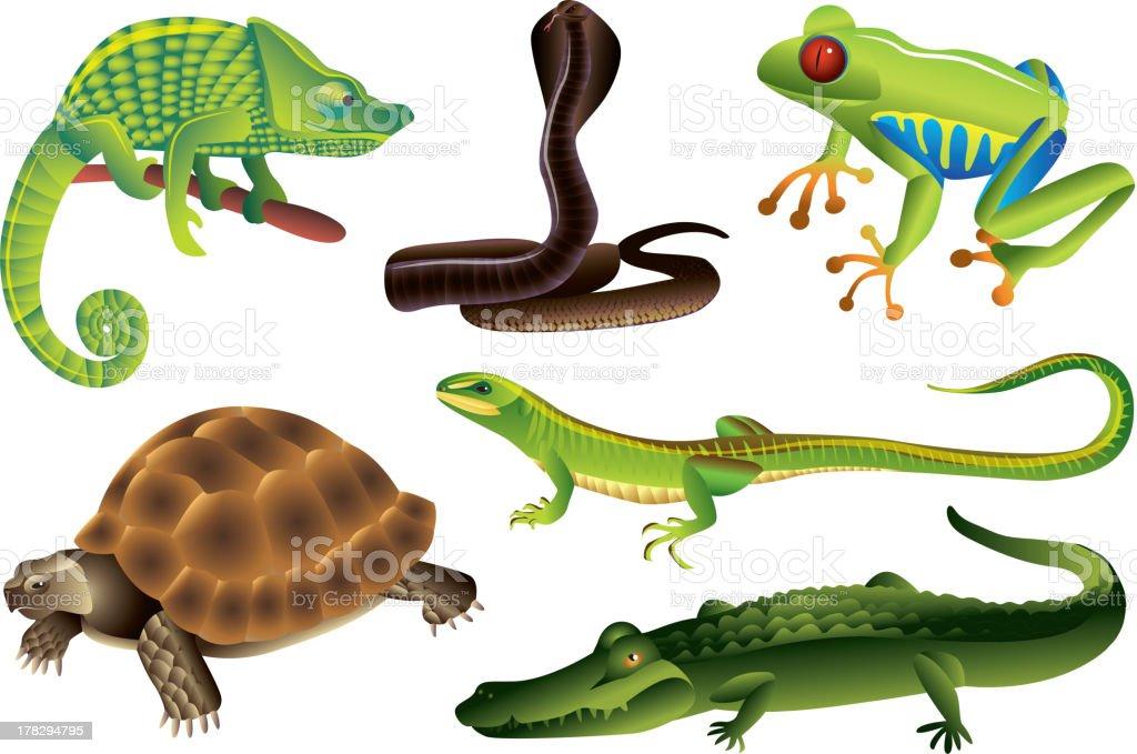 reptiles and amphibians set vektorkonstillustration