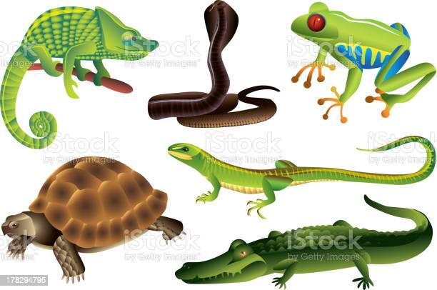 Reptiles And Amphibians Set Stock Illustration - Download Image Now
