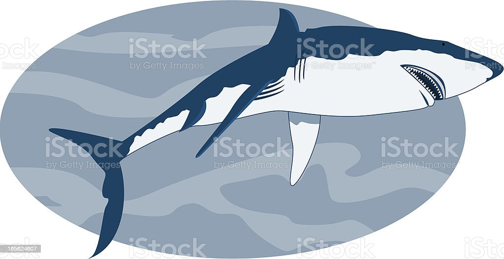 Requin Illustration d'un requin vus du dessous. No gradient, high resolution jpeg. Animal stock vector