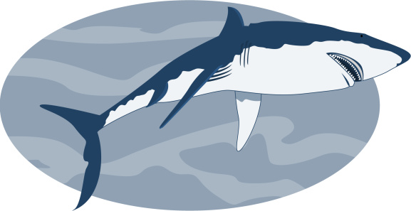 Requin Stock Illustration - Download Image Now