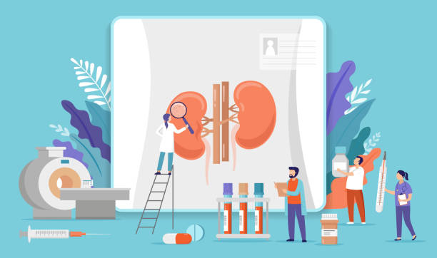 Research scientists. Science laboratory, chemistry scientists and clinical lab. Medical research items, clinical science laboratories experiments. Kidney inspection, concept vector illustration vector art illustration