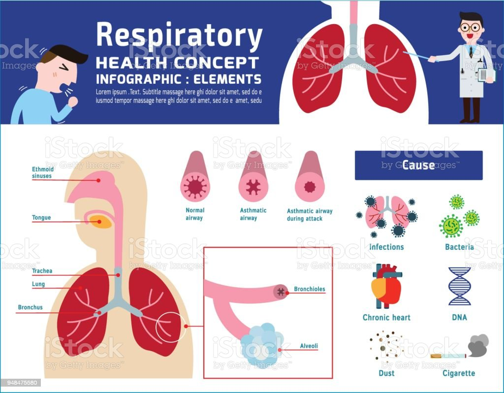 Respiratory system of human. illustration about anatomy and physiology. infographic disease medical banner header healthcare concept. Vector icon flat cartoon design Isolated on white background. vector art illustration