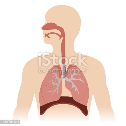 istock respiratory system 489734346