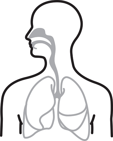 Line art illustration of a human respiratory system.