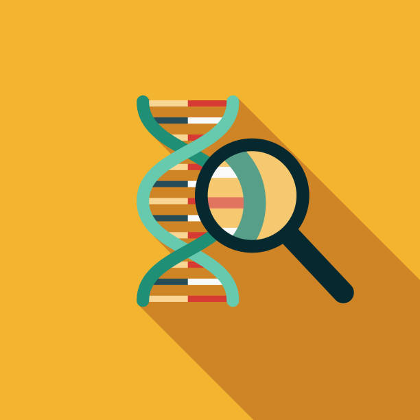 DNA Results Flat Design Genetic Testing Icon A flat design styled icon with a long side shadow. Color swatches are global so it's easy to edit and change the colors. dna test stock illustrations