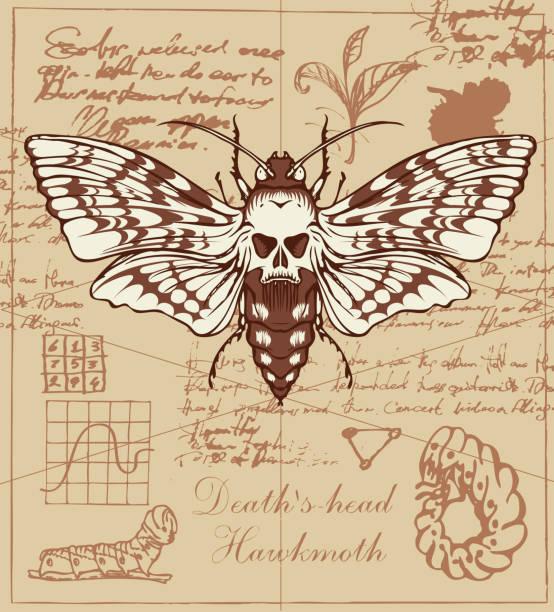 stockillustraties, clipart, cartoons en iconen met retro banner met tekening van een vlinder dead head - larve