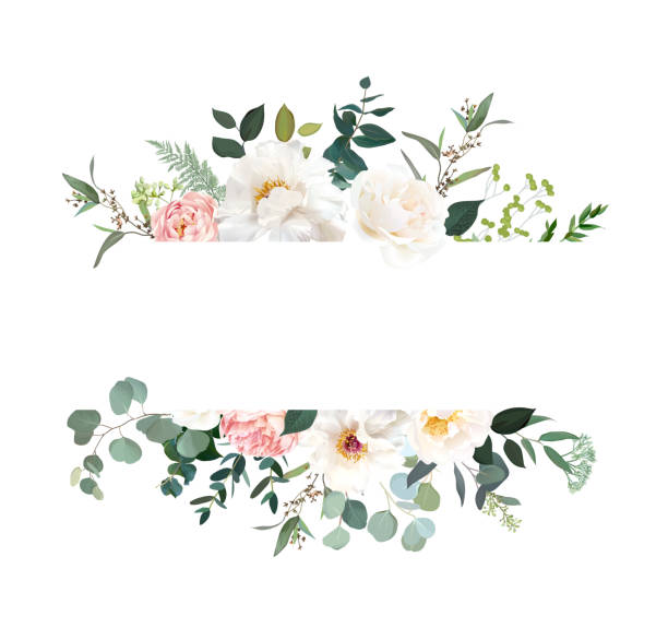 Retro delicate vector design flower horizontal banner Retro delicate vector design flower horizontal banner. Creamy peony, pink garden rose, white ranunculus, eucalyptus, greenery, sage and blush. Wedding floral garland. Watercolor. Isolated and editable flowers stock illustrations