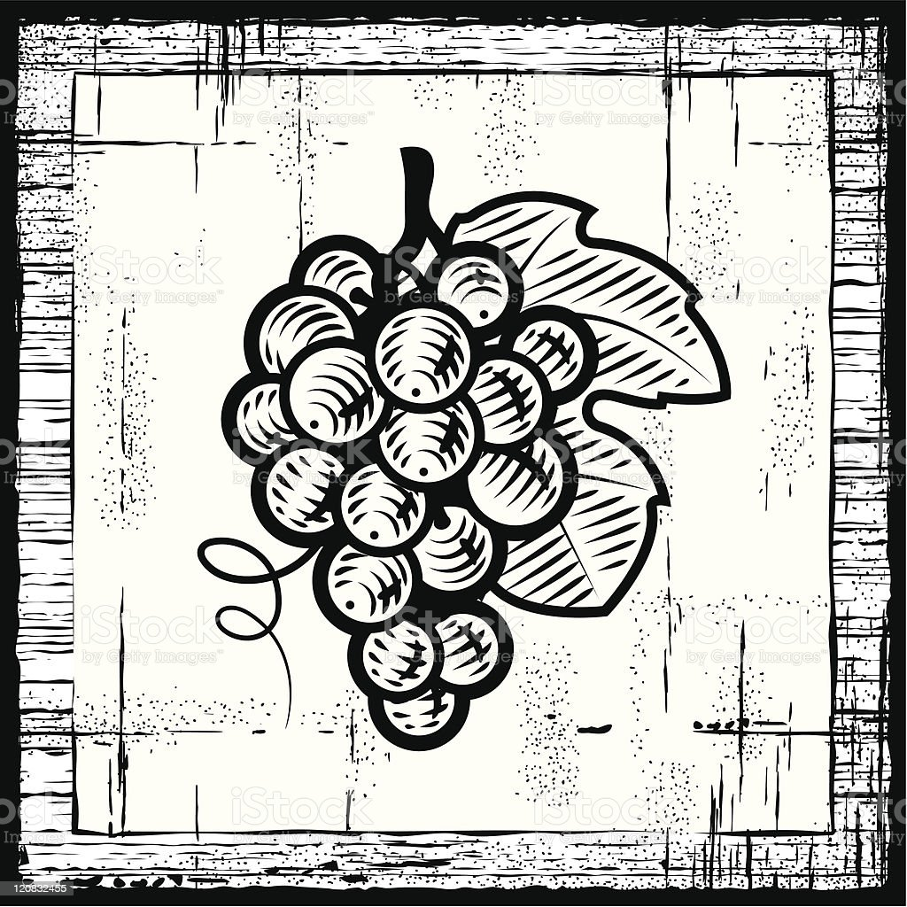 Retro grapes bunch black and white vector art illustration