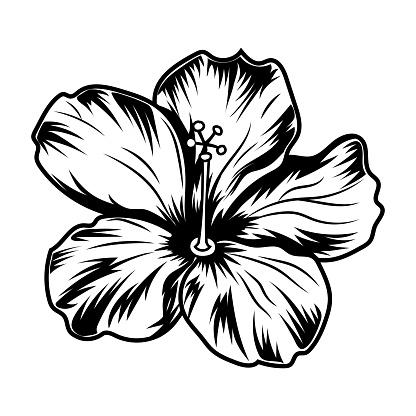 Retro hibiscus flower vector illustration