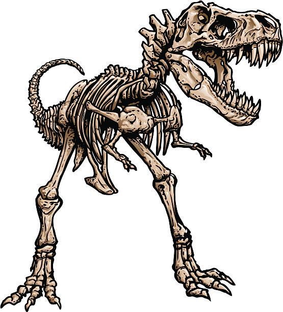 t rex skeleton - animal skeleton stock illustrations