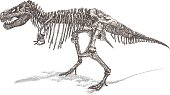 T Rex Skeleton Vector illustration.Additional EPS file contains the same image in stroke form, allowing you to convert to a brush of your choosing. Colors are layered and grouped separately. Easily editable.