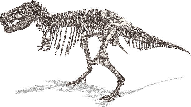 T Rex Skeleton vector art illustration