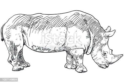 Vector drawing of rhinoceros