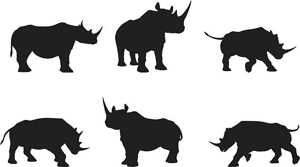 Rhino Silhouette Collection File types included are ai, eps, and jpg. rhinoceros stock illustrations