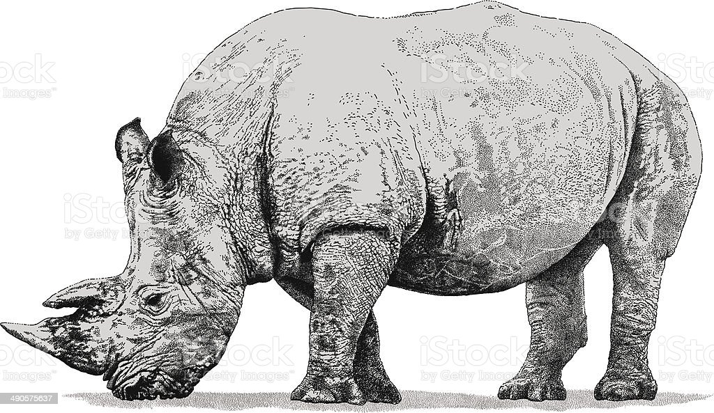 Rhino vector art illustration
