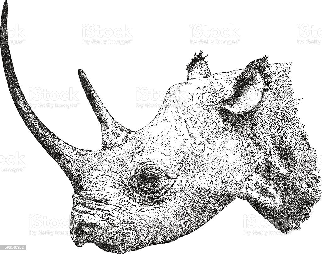 Rhinoceros vector art illustration
