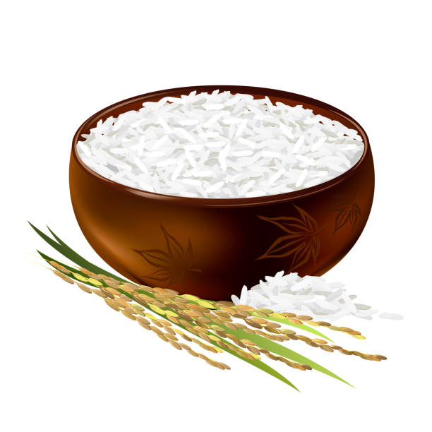 free rice plant vector art free rice plant vector art