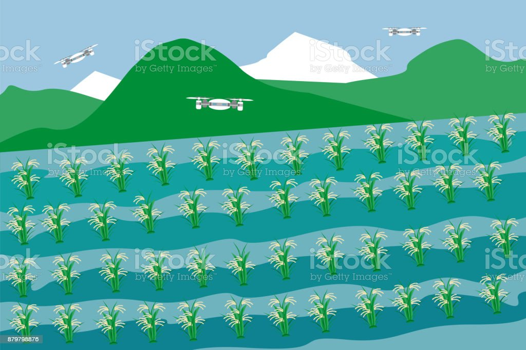 Rice field.  Internet of things in agriculture. vector art illustration
