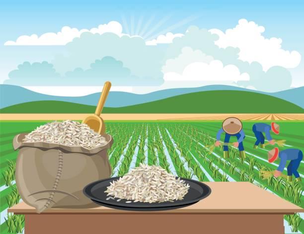 stockillustraties, clipart, cartoons en iconen met rijst op een achtergrond van rijst van een veld - sawa