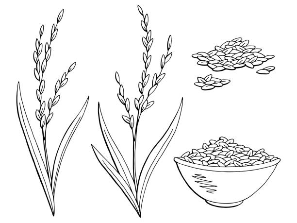 rice plant vector art graphics freevector com rice plant vector art graphics freevector com