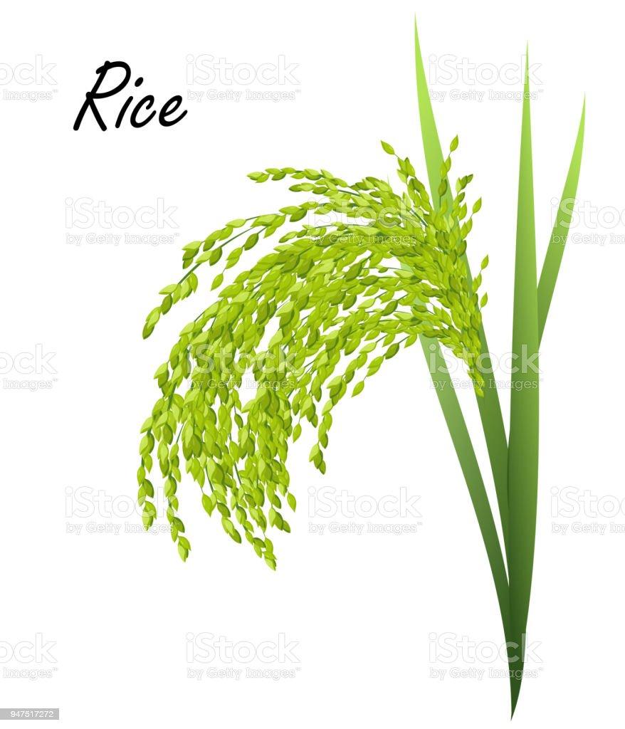 Rice Plant Realistic Vector Illustration Stock Vector Art More