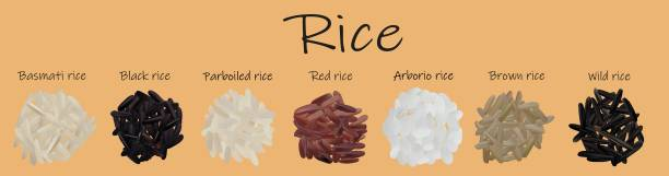 ilustrações de stock, clip art, desenhos animados e ícones de rice set black, red, basmati, brown, wild, parboiled, arborio. 3d vector illustration, rice close up. - arroz alimento básico